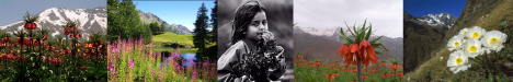 dağ_çiçekleri