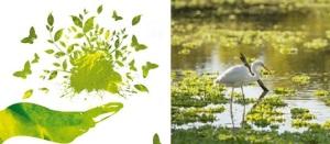 yeşil_küre