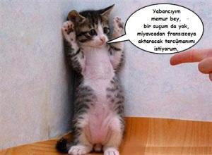 cat-under-arrest1